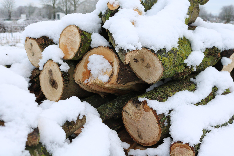 Free stock photo of logs, snow