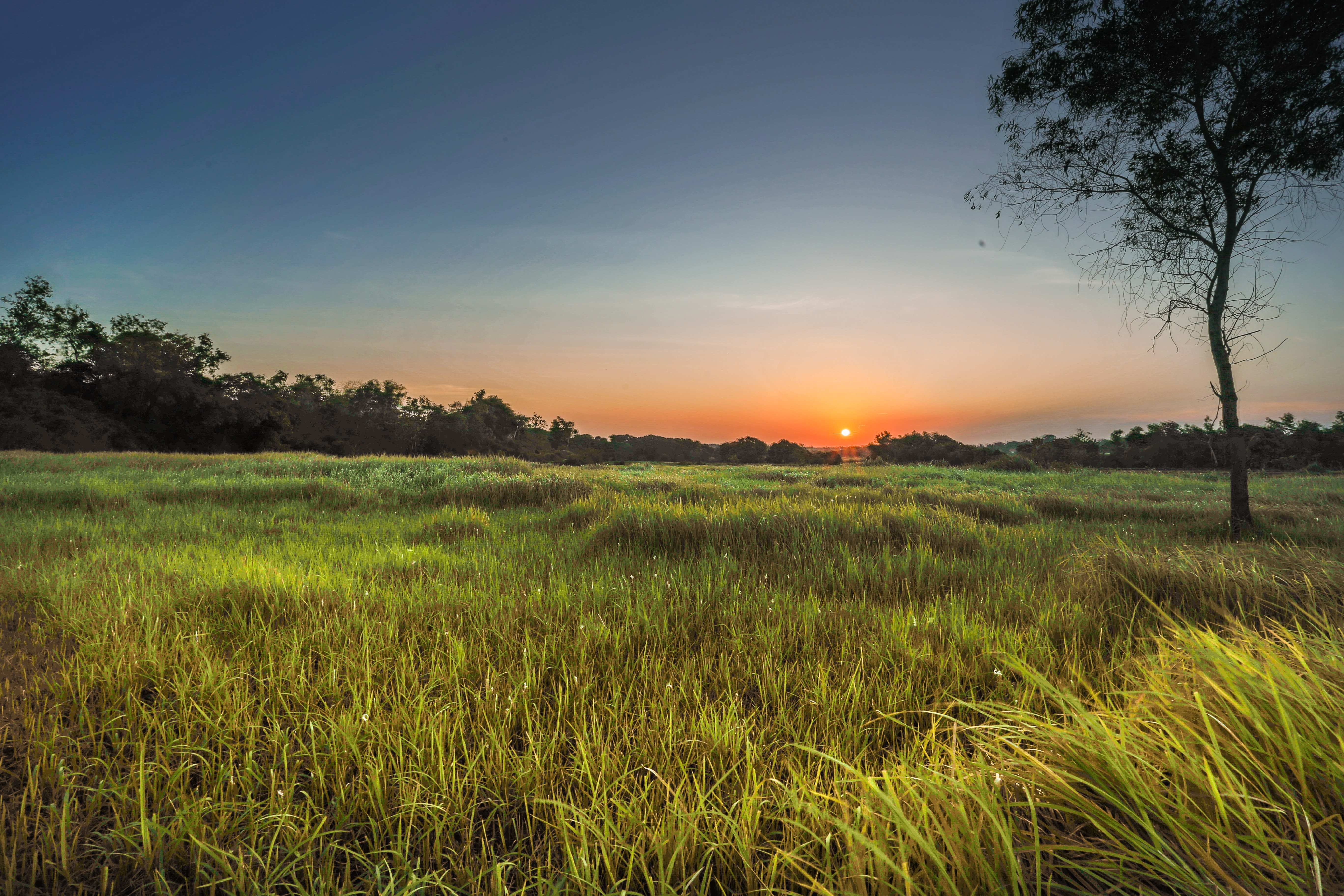 Landscape Photography Of Green Grass Field During Golden Hour