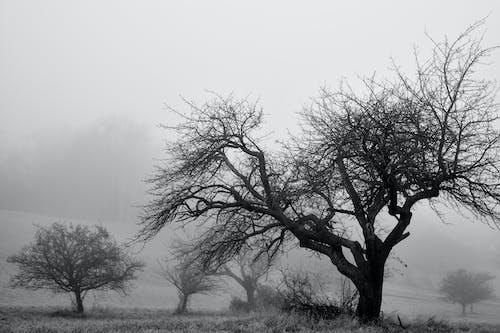 Základová fotografie zdarma na téma černobílá, mlha, Rakousko, stromy