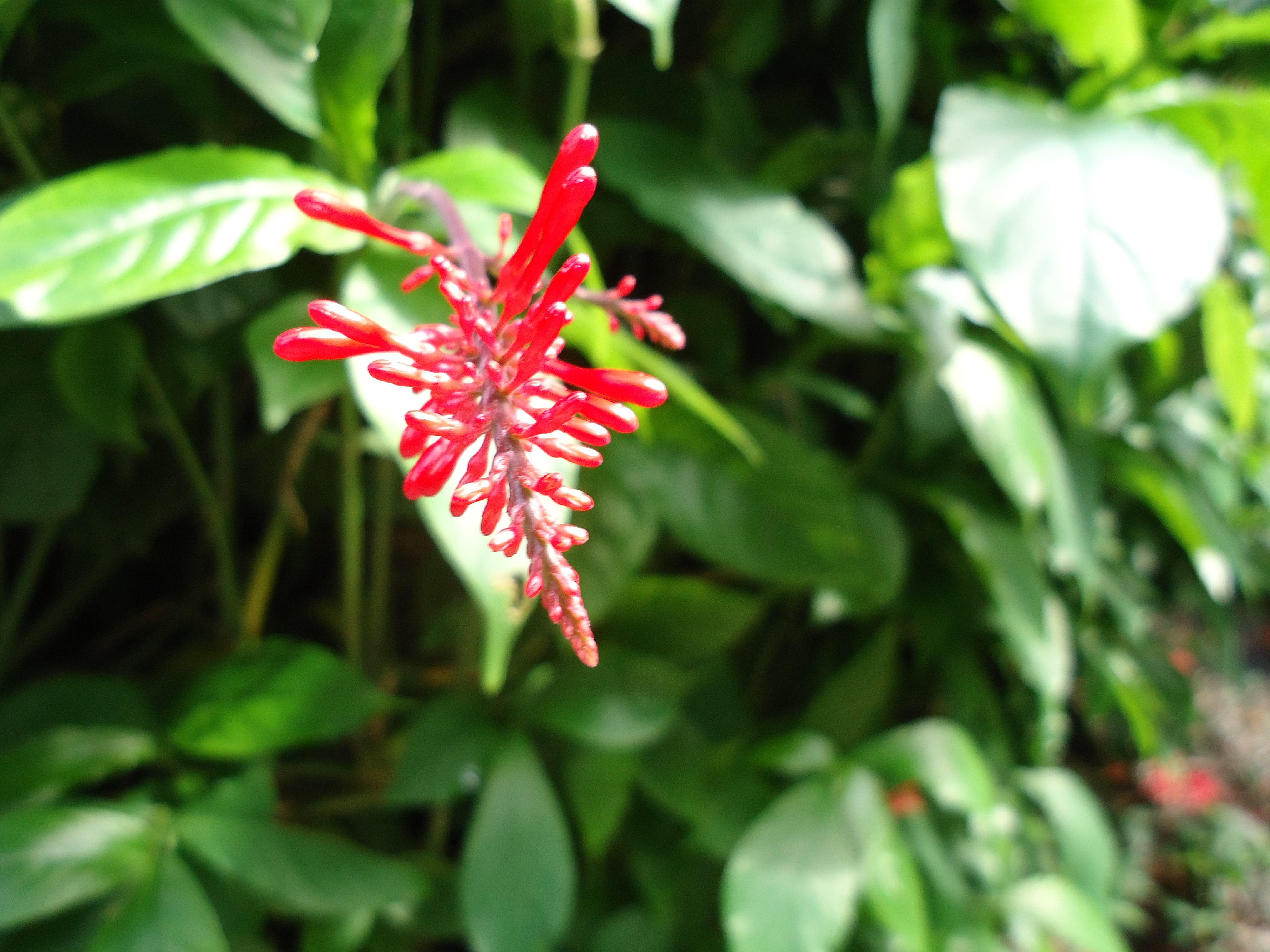 Free stock photo of flower, tropical