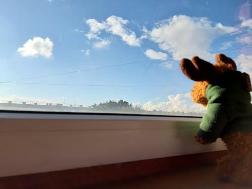 Foto d'estoc gratuïta de assolellat, dessuadora amb caputxa, dia assolellat