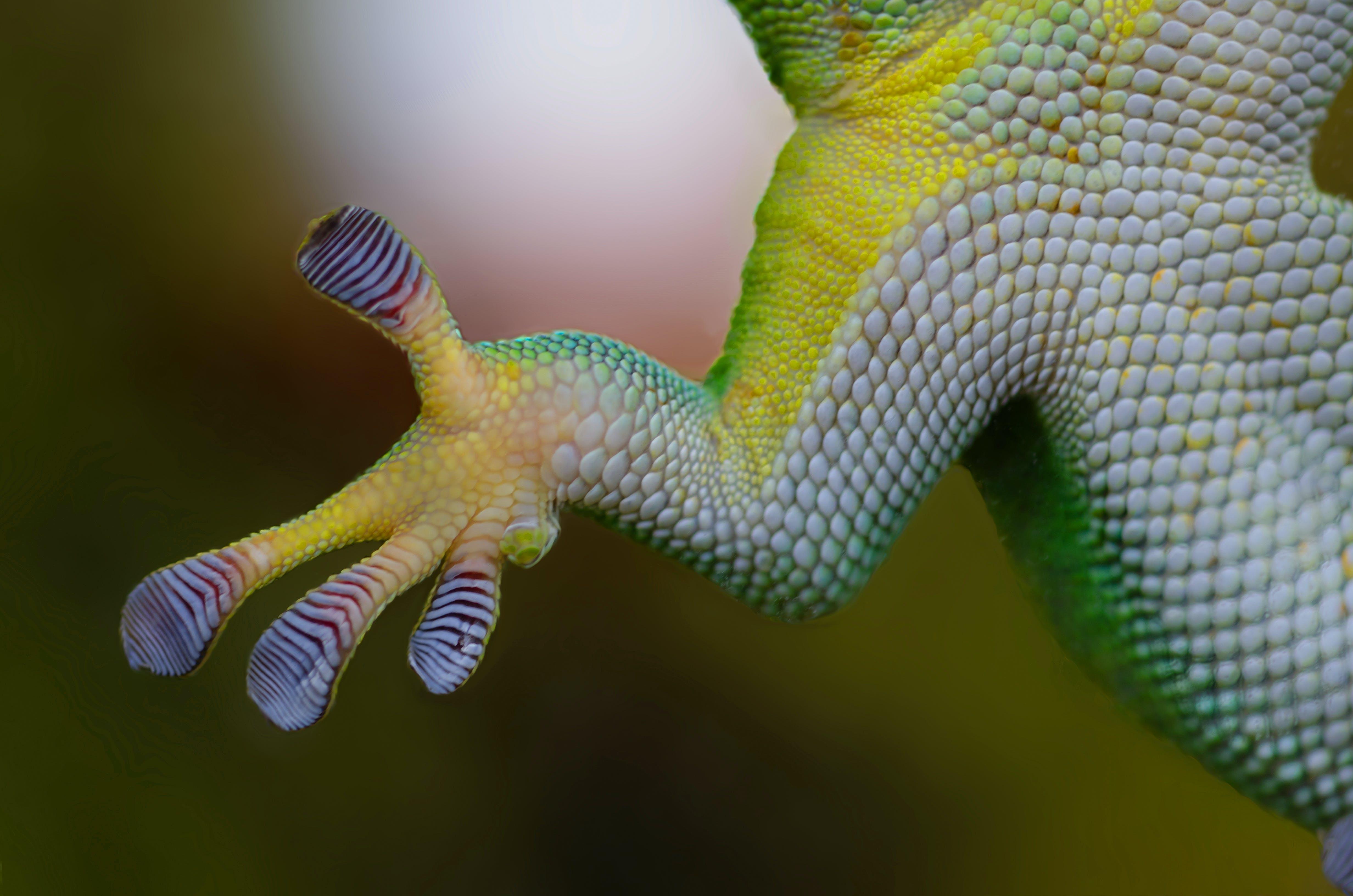 Free stock photo of animal, glass, green, lizard