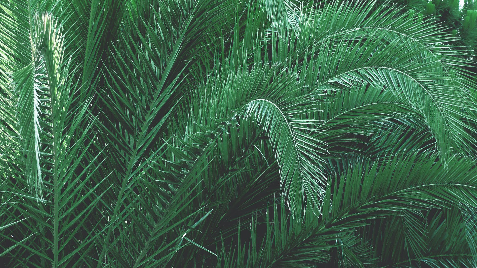 Kostenloses Stock Foto zu baum, grün, palme