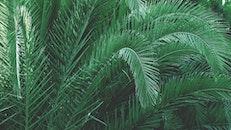 leaves, tree, green