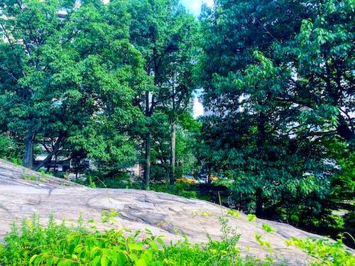 Δωρεάν στοκ φωτογραφιών με albero, libertã, parco, parco centrale