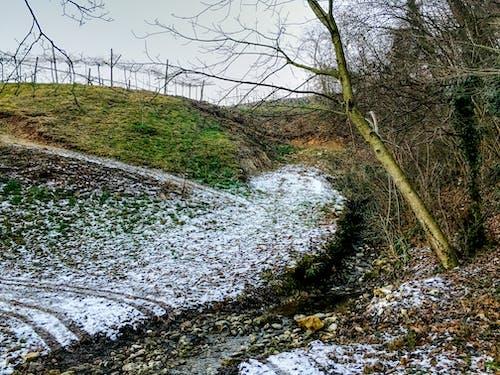 Δωρεάν στοκ φωτογραφιών με bosco, campi, cielo, collina