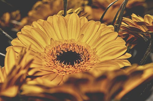 Free stock photo of flower, yellow