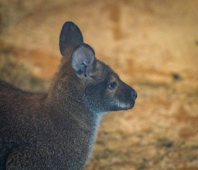 Selective Focus Photo of Brown Mammal