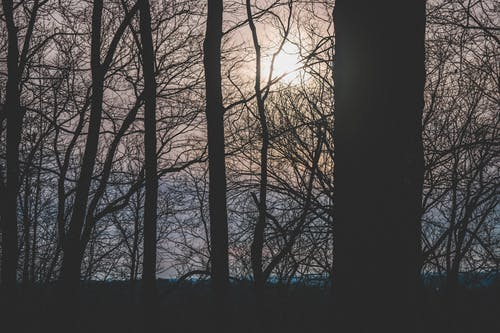 Silhouette Photograph of Trees