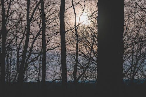 Безкоштовне стокове фото на тему «безтурботний, гілки, дерева, краєвид»