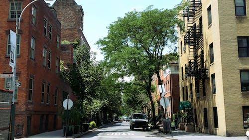 Imagine de stoc gratuită din arbore, arbori, atmosferă de vară, atrăgător