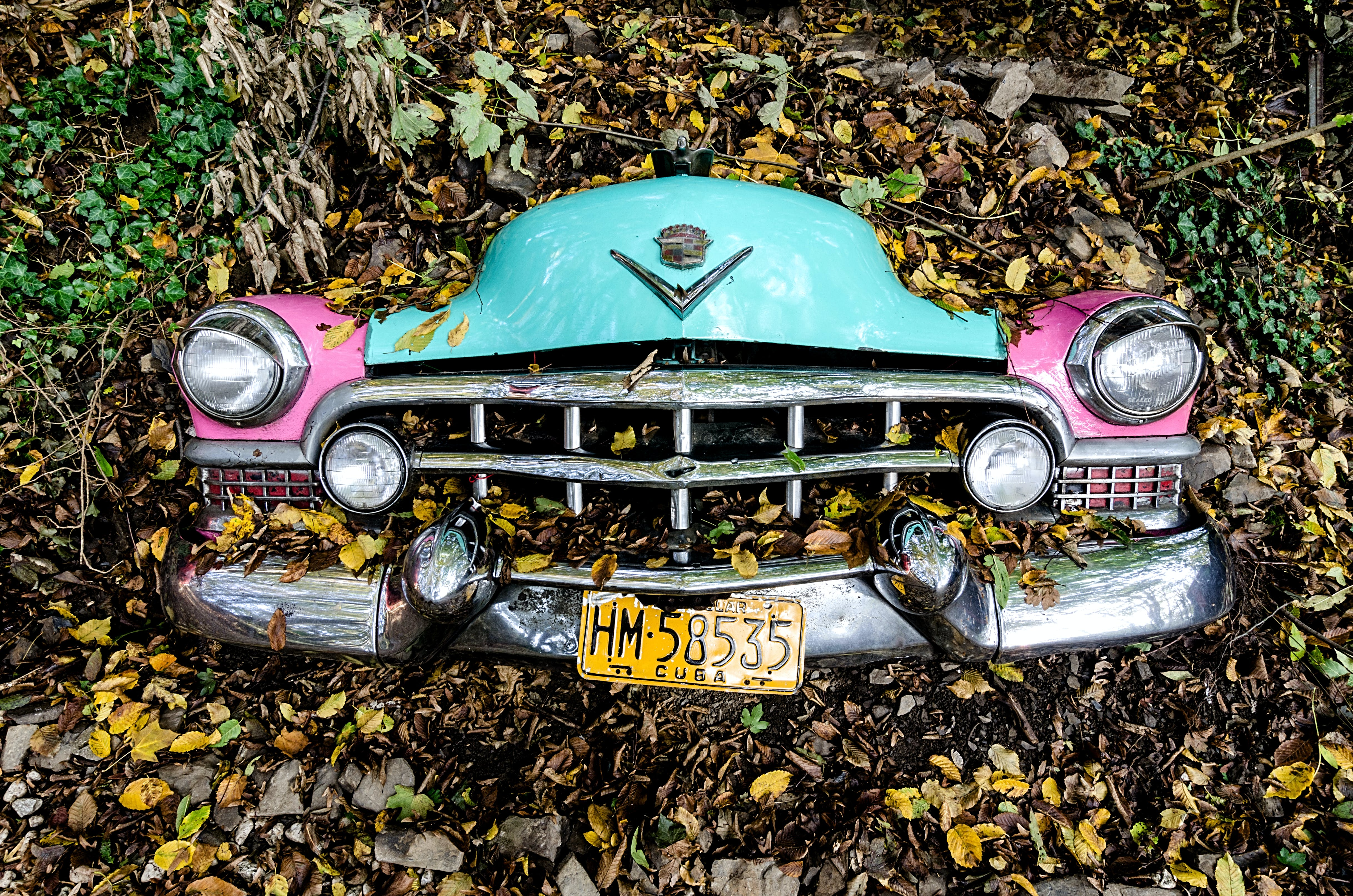 Photo of Car Covered with Leaves