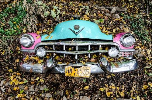 Darmowe zdjęcie z galerii z auto, klasyczny, liście, numer rejestracyjny