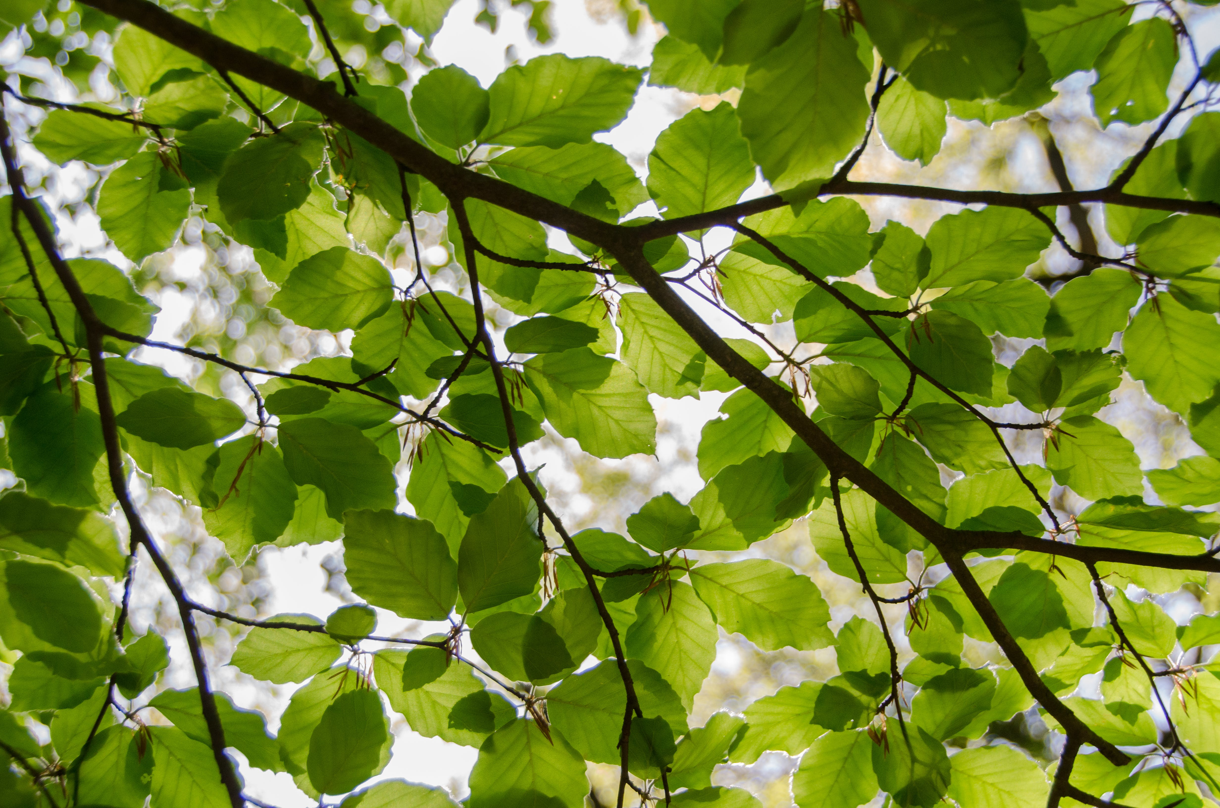 Free stock photo of nature, sunny, leaves, tree