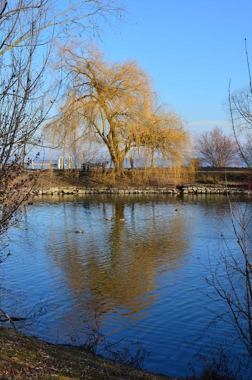 Darmowe zdjęcie z galerii z ã gugua, ábolbol, estanque, lago