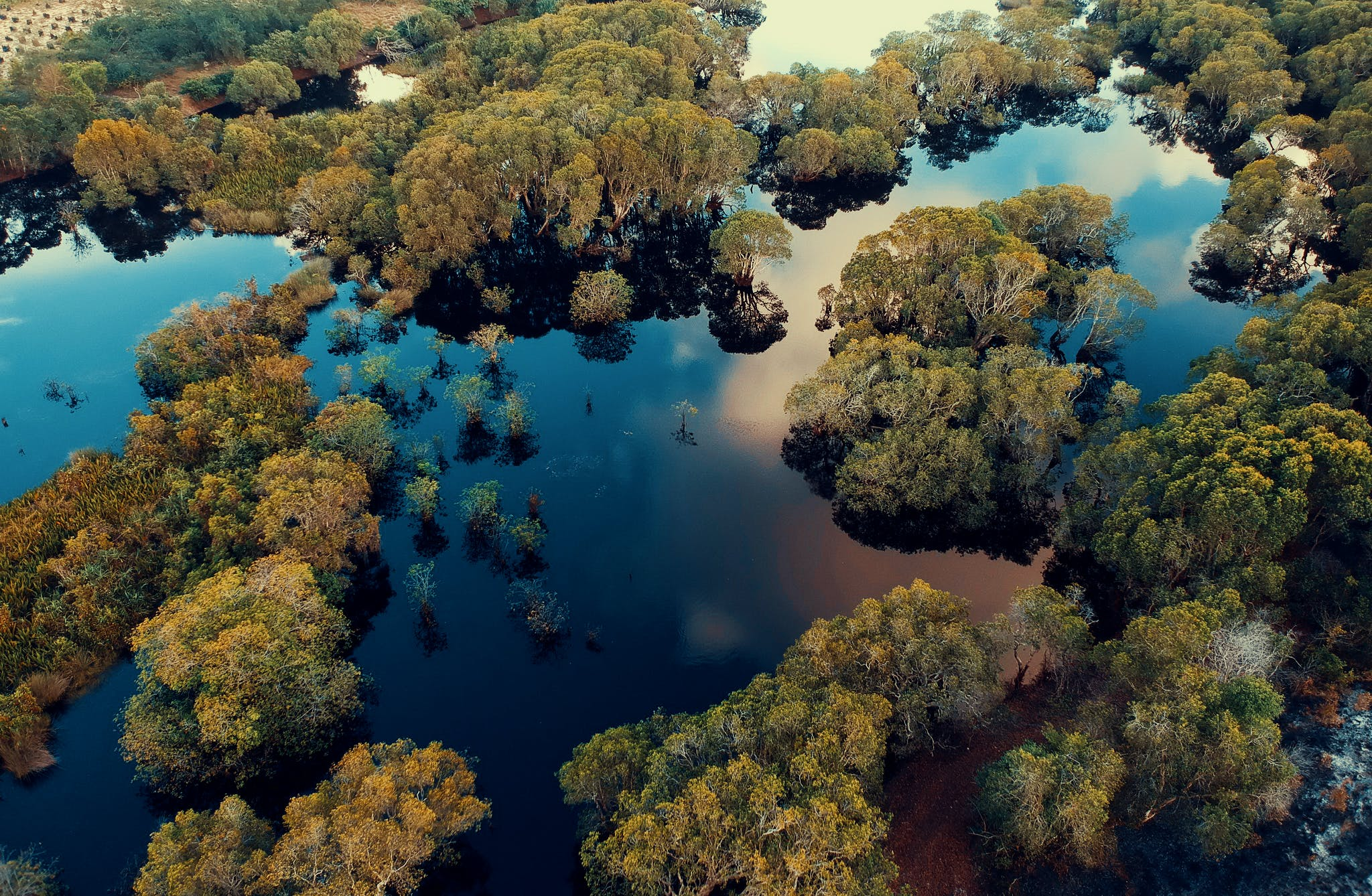Aerial View Photography of Green Leaf Trees Surrounded by Body of Water at Daytime