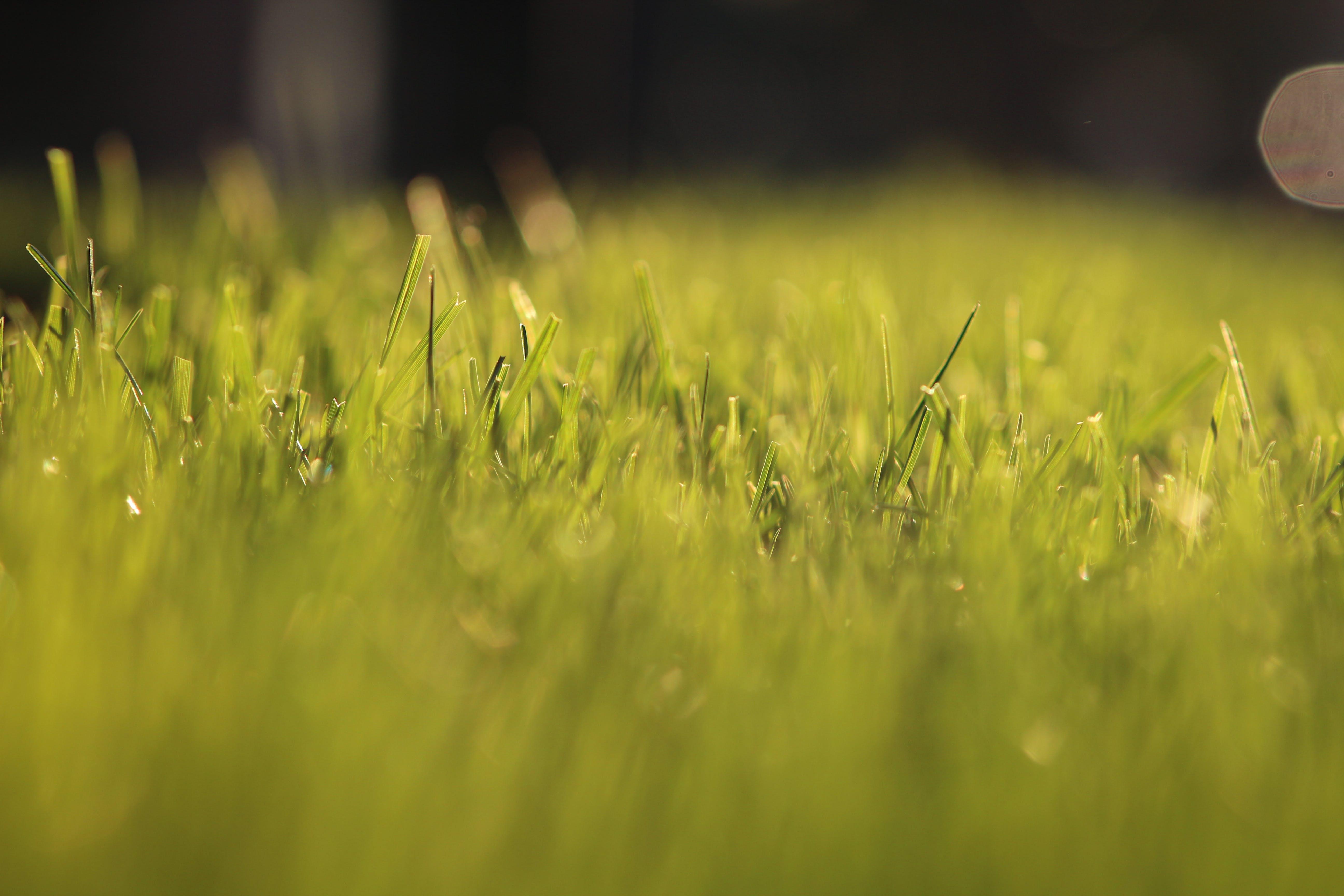 Free stock photo of grass, blade of grass, grass land, dry grass