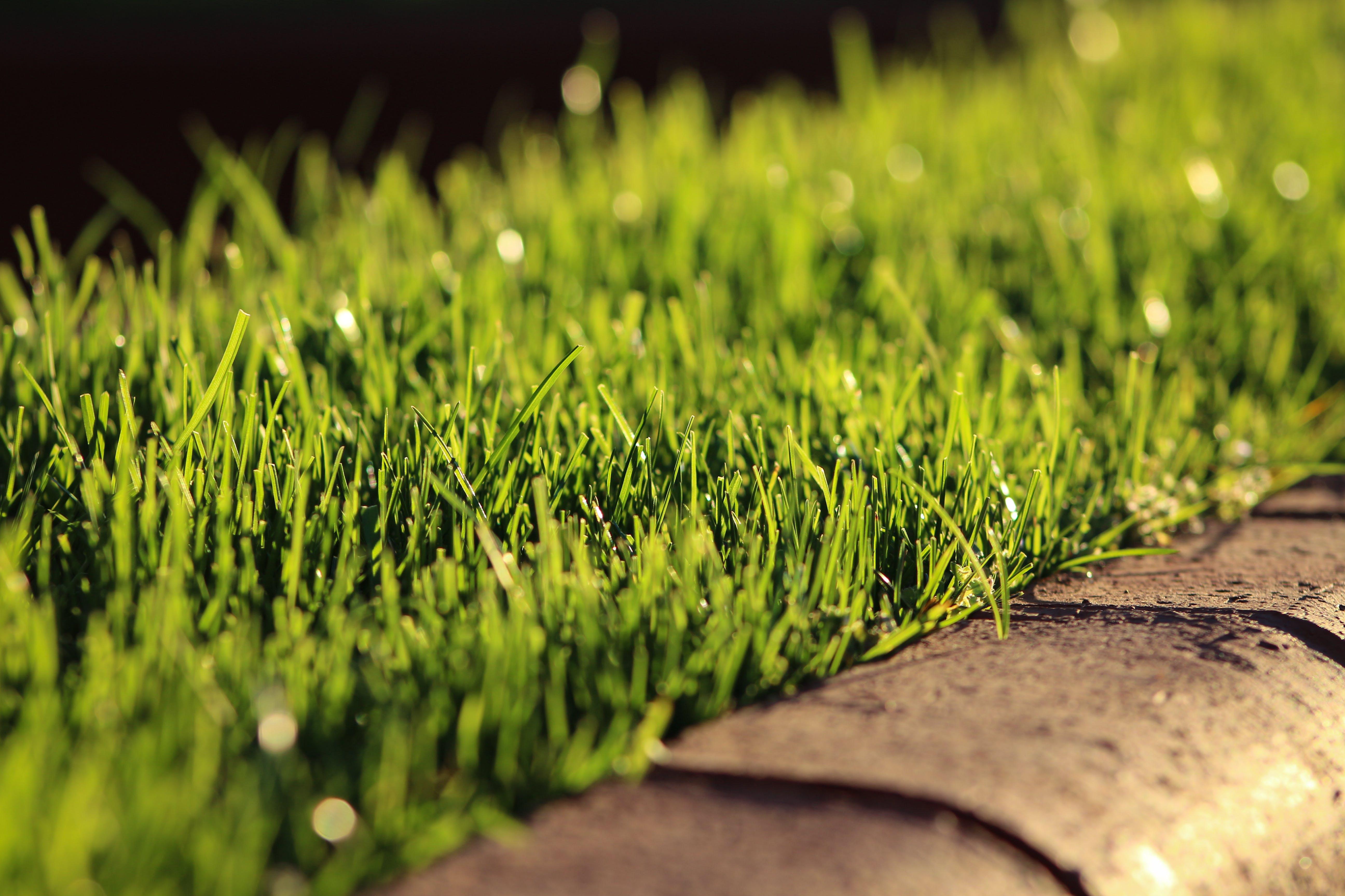 Free stock photo of blade of grass, dry grass, grass, grass field