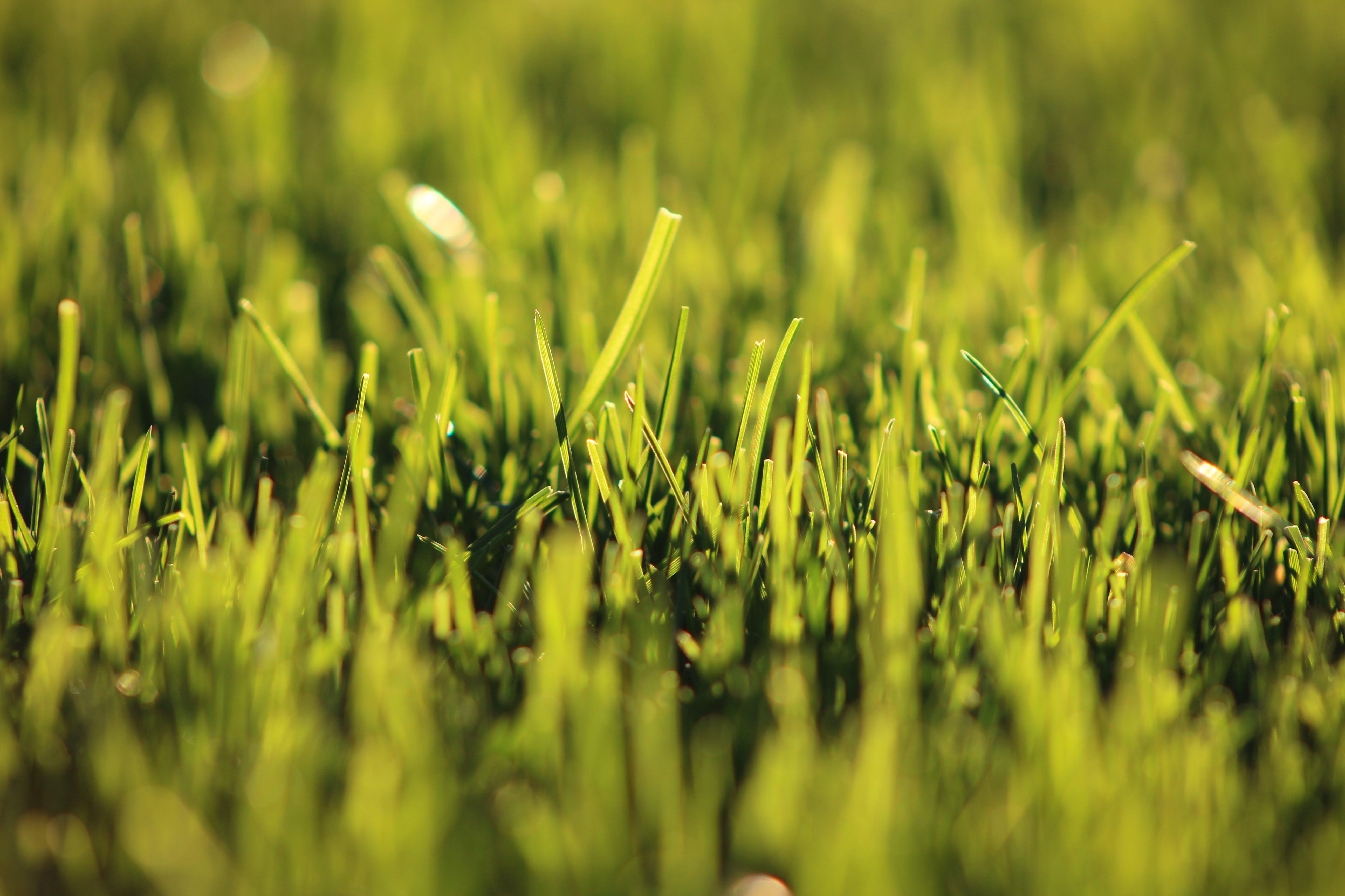 Foto profissional grátis de área, aumento, borrão, campo de grama