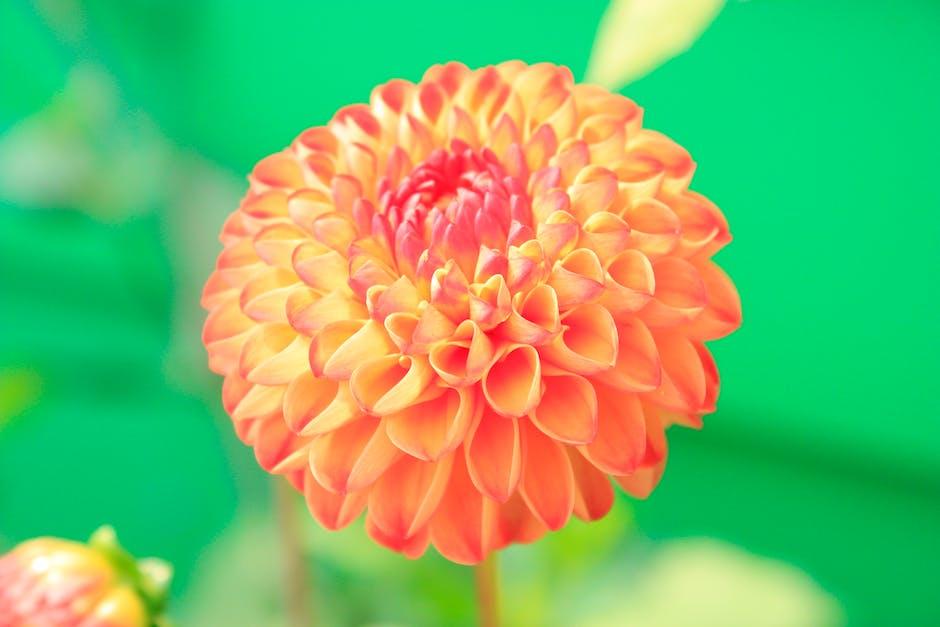 Orange petaled flower close up photo