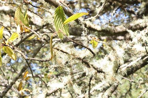 Gratis lagerfoto af gren, mos, træ