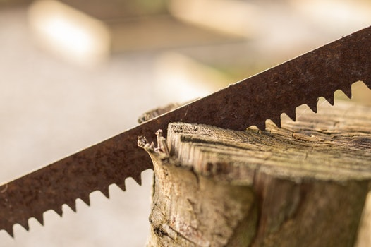 Free stock photo of wood, tool, saw, forestry