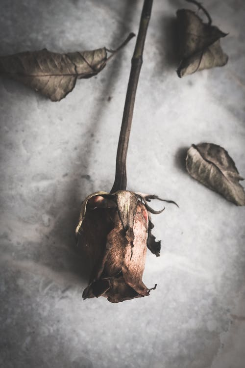 Brown Dried Leaf on Gray Concrete Floor