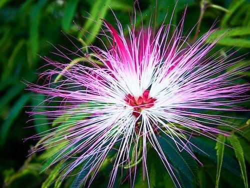 Základová fotografie zdarma na téma barevný, botanický, fotografie přírody, Hongkong