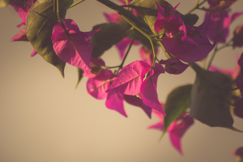 Free stock photo of flowering, flowers, minimalist, nature