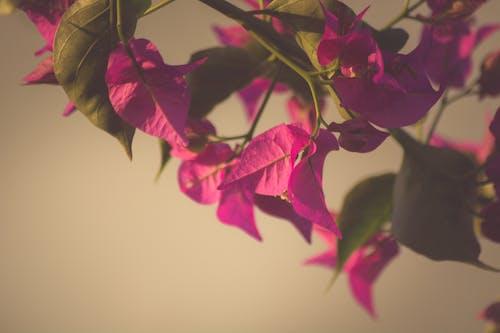 Ảnh lưu trữ miễn phí về hoa, màu tím, ra hoa, Thiên nhiên