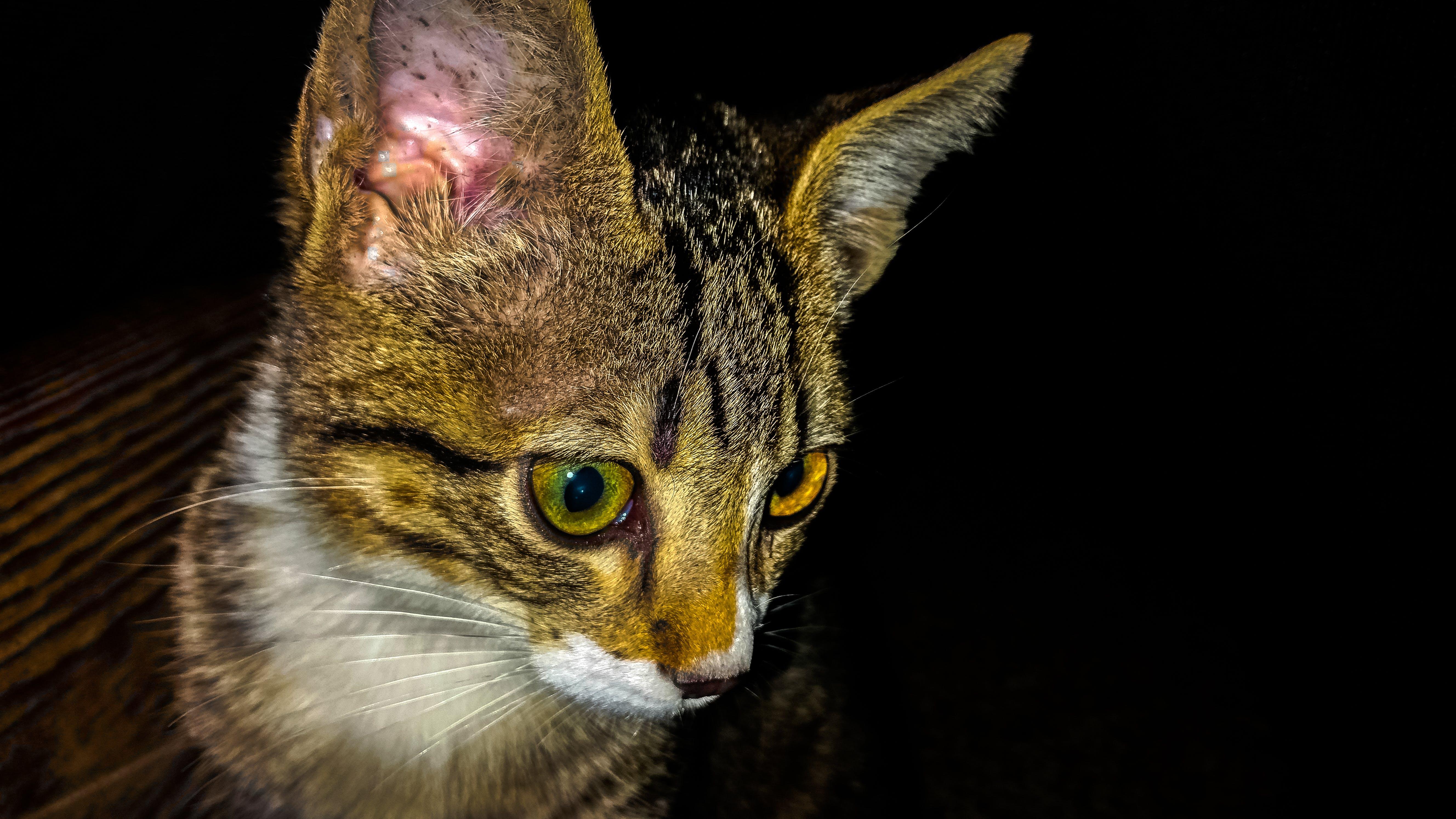 Free stock photo of cat, cat face