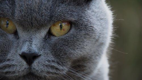 Gratis lagerfoto af close-up, dyr, fokus, fokusere
