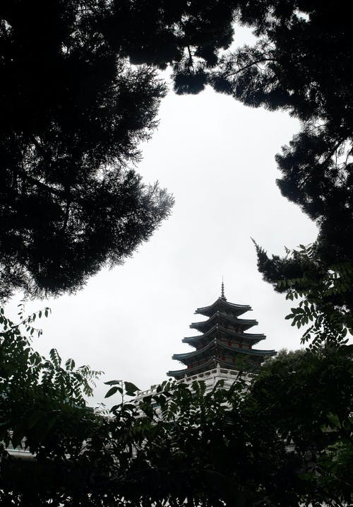 Darmowe zdjęcie z galerii z architektura, czarno-biały, drzewa, krajobraz