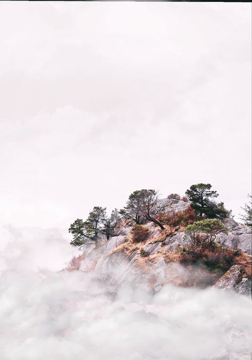 Trees on Mountain Cliff Surrounded by Fogs