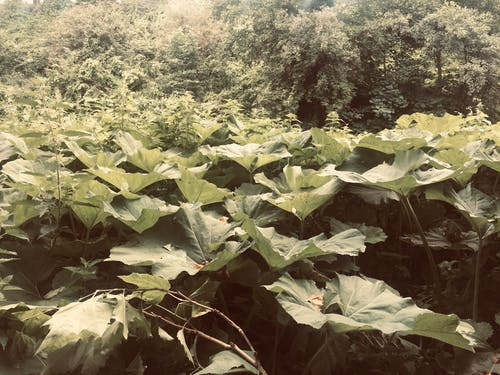 Free stock photo of dramatic, leaves, plant field