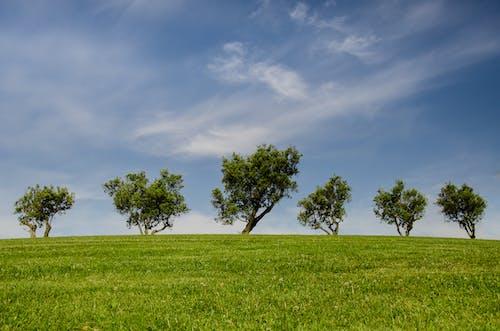 夏天, 夏季, 天性, 天空 的 免费素材照片