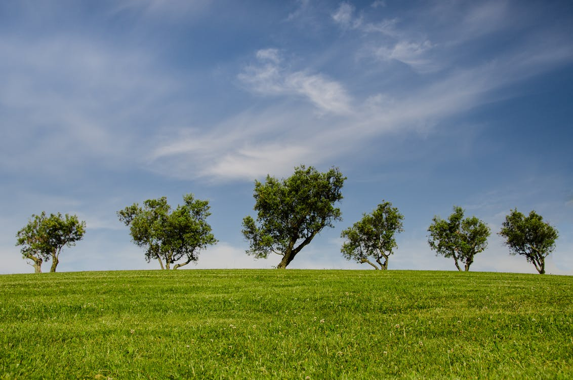 Five Green Leafed Trees on Green Grass Field Under Cloudy Sky