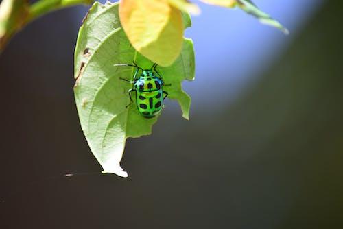 Free stock photo of #jeweledbug #shinebrightlikeadiamond