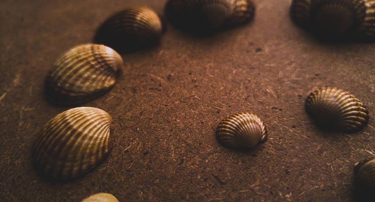 assorti, bord de mer, conque