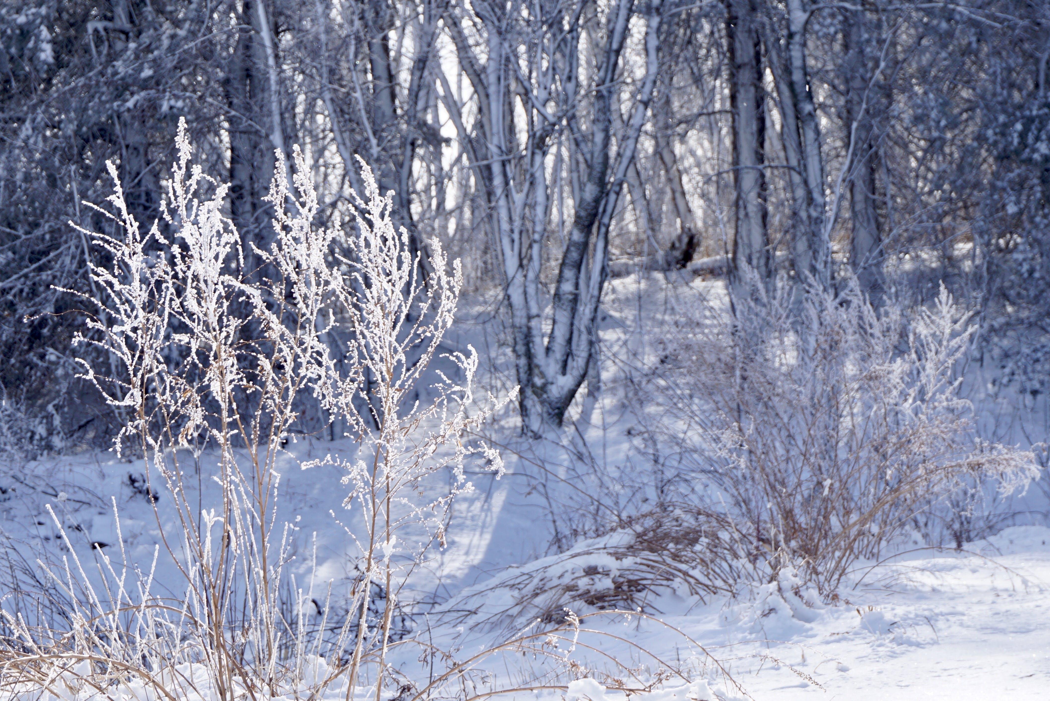 Δωρεάν στοκ φωτογραφιών με δέντρα, εποχή, ημέρα, καιρός