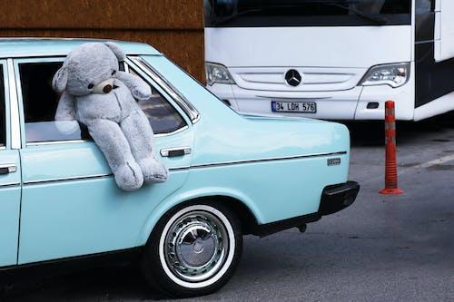 White and Blue Bear Plush Toy on White Car