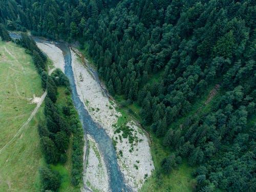 Ảnh lưu trữ miễn phí về ánh sáng ban ngày, cây, con sông