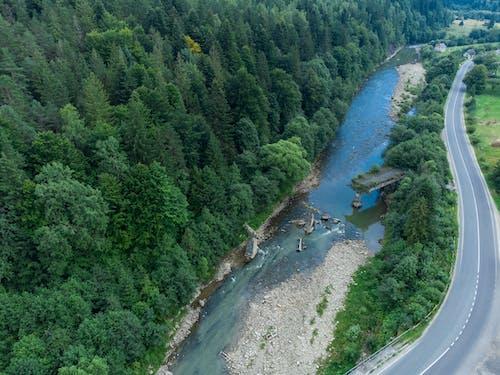 Ảnh lưu trữ miễn phí về cầu, cây, con sông