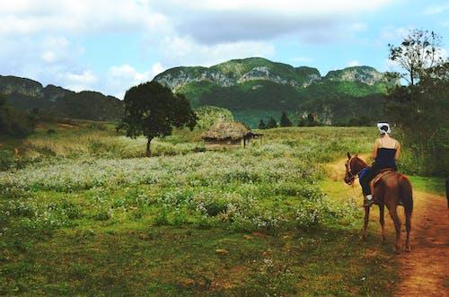 Foto profissional grátis de áreas, casa de campo, cavaleiro, cavalo