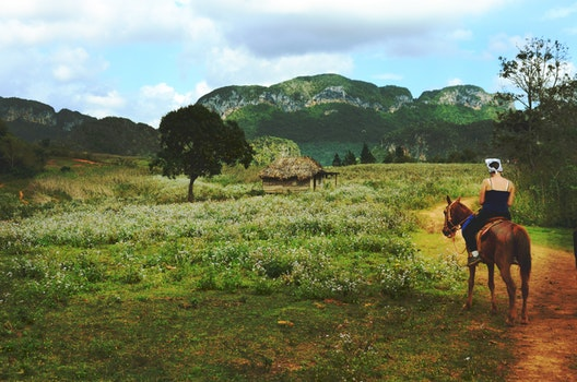 Man Riding Brown Horse Near Green Field during Daytime