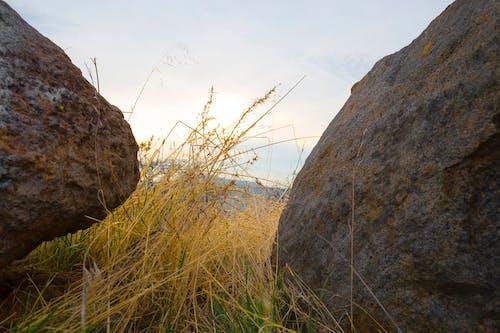Gratis arkivbilde med gress, steiner