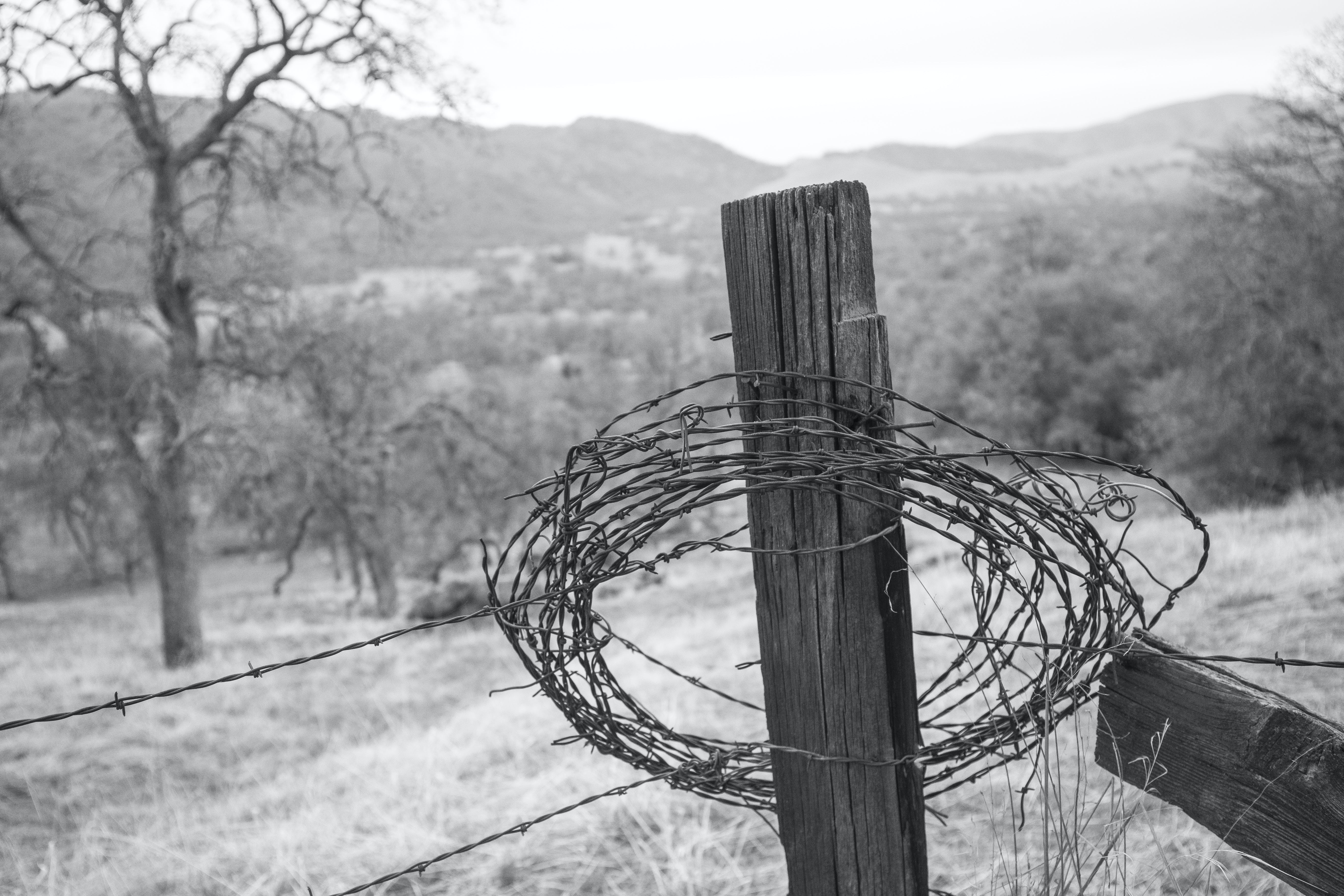Free stock photo of barbed wire, country, fence, fence post