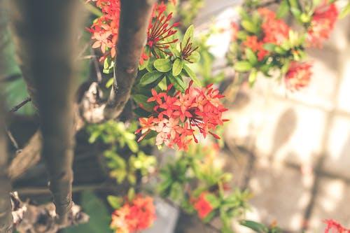 Darmowe zdjęcie z galerii z botaniczny, czerwony, dzień, flora