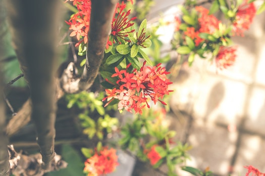 Red Cluster Flowers