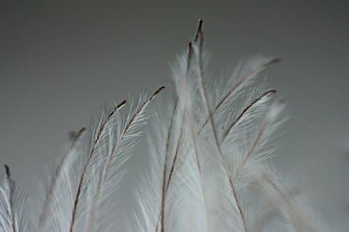 宏觀, 羽毛, 裝飾植物 的 免费素材照片